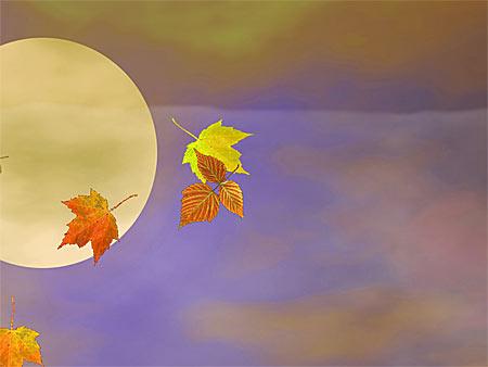 Autumn Screensaver - Herbst Bildschirmschoner
