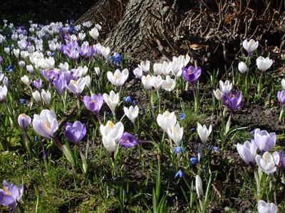 Frühling Bildschirmschoner