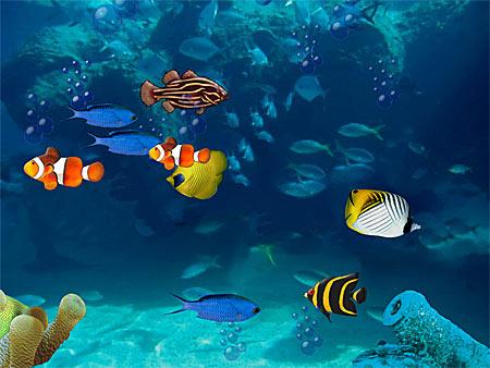 Bildschirmschoner Aquarium kostenlos