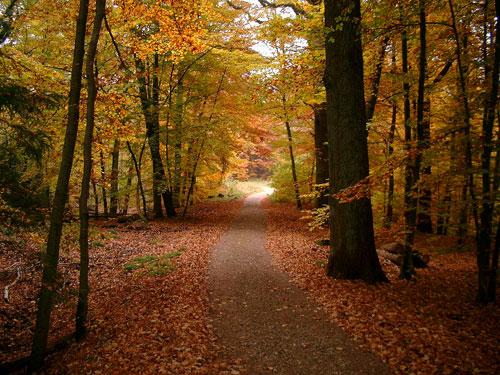 Bildschirmschoner Herbst Bilder
